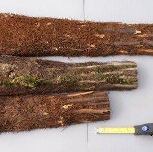 Treefern Producten